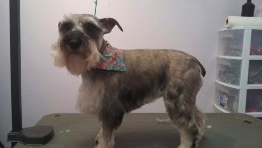 Abbey Animal Hospital- Virginia Beach, VA: After Grooming