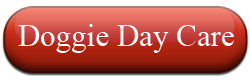Abbey Animal Hospital- Virginia Beach, VA: Doggie Daycare